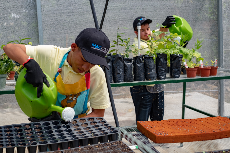 A new greenhouse project for children with special needs.