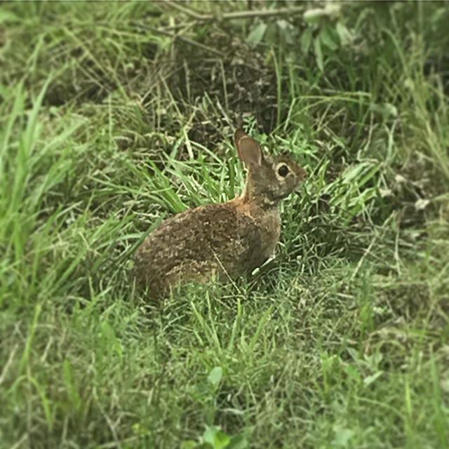 Friend rabbit. Not food rabbit.