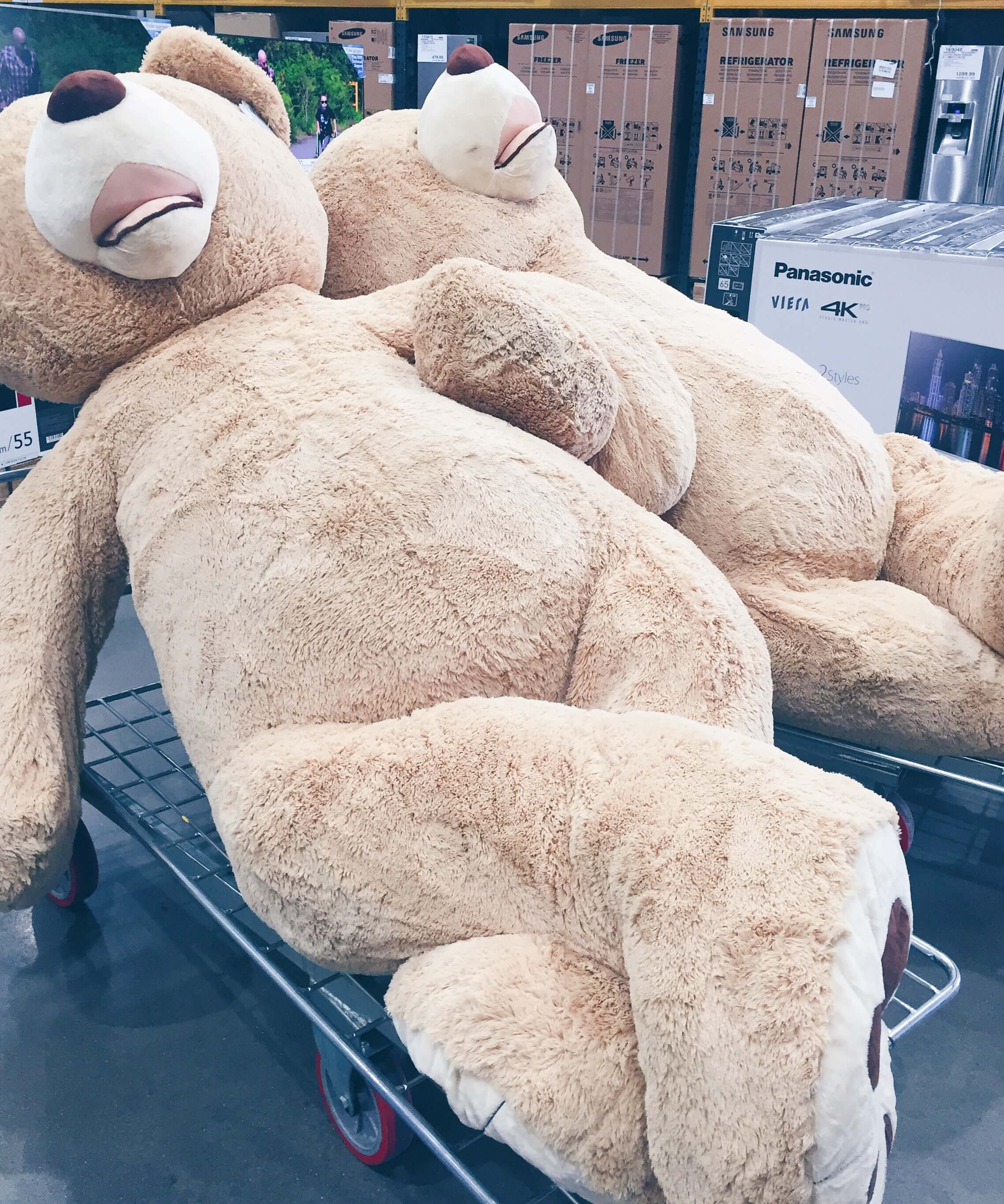 The largest teddy bear's I've ever seen in Costco's!
