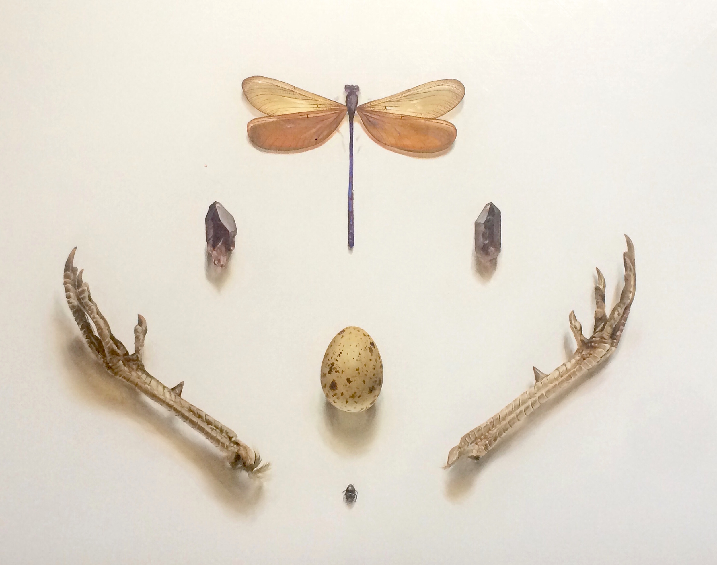 Dragonfly and Pheasant Feet