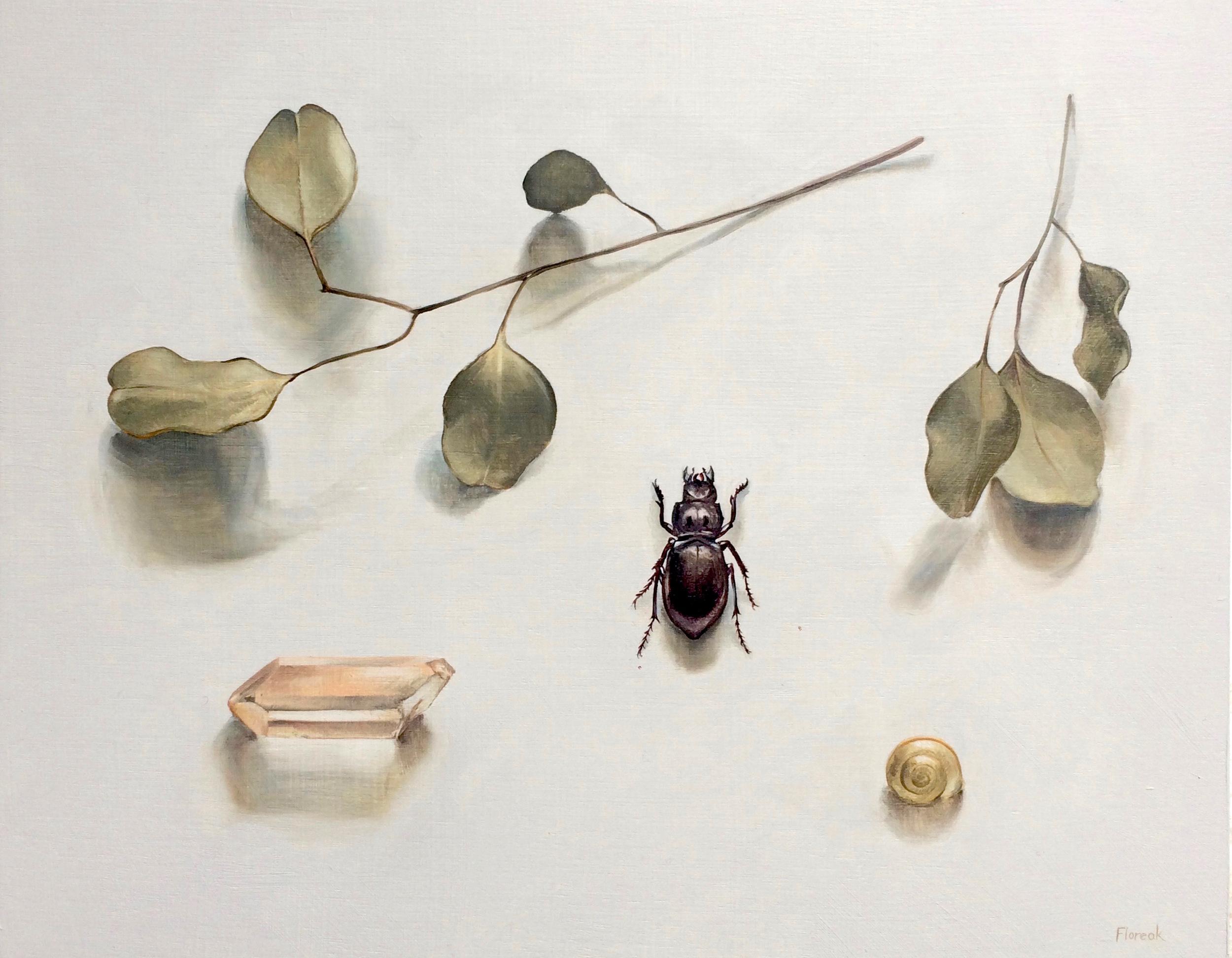 Eucalyptus and Beetle
