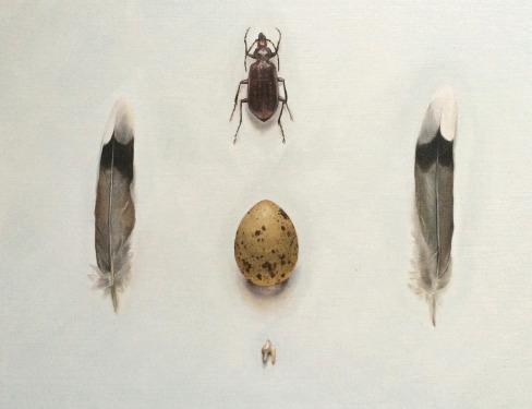 Beetle and Egg