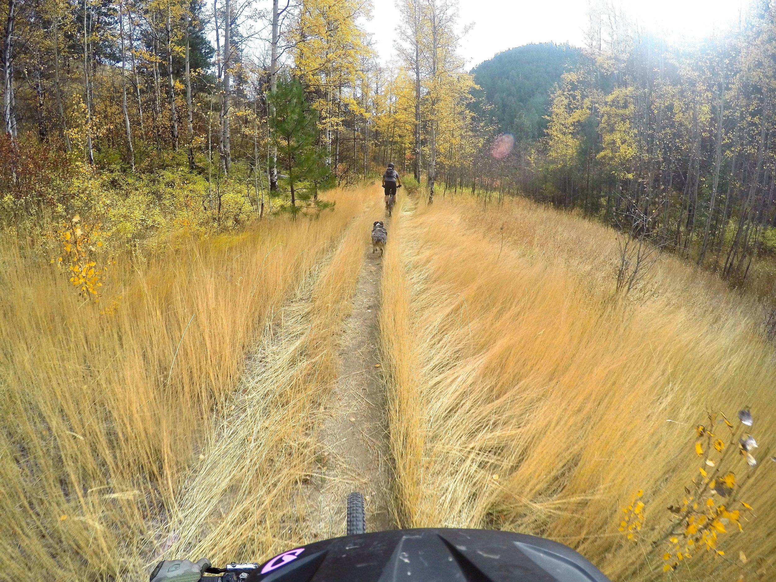 Mellow fields of gold, mountain biking near Wenatchee, Washington.