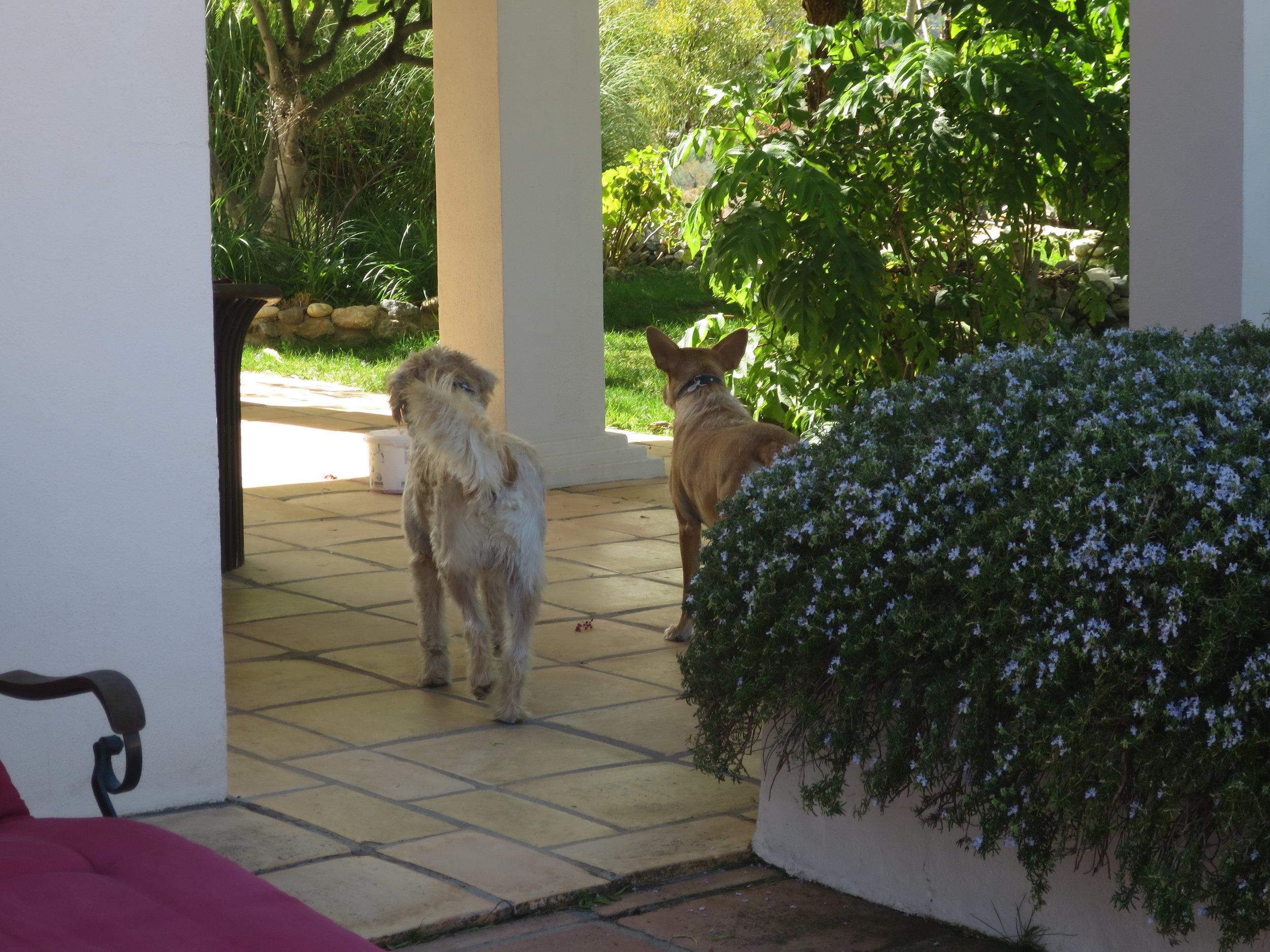 Yoga Retreat Spain 9.JPG