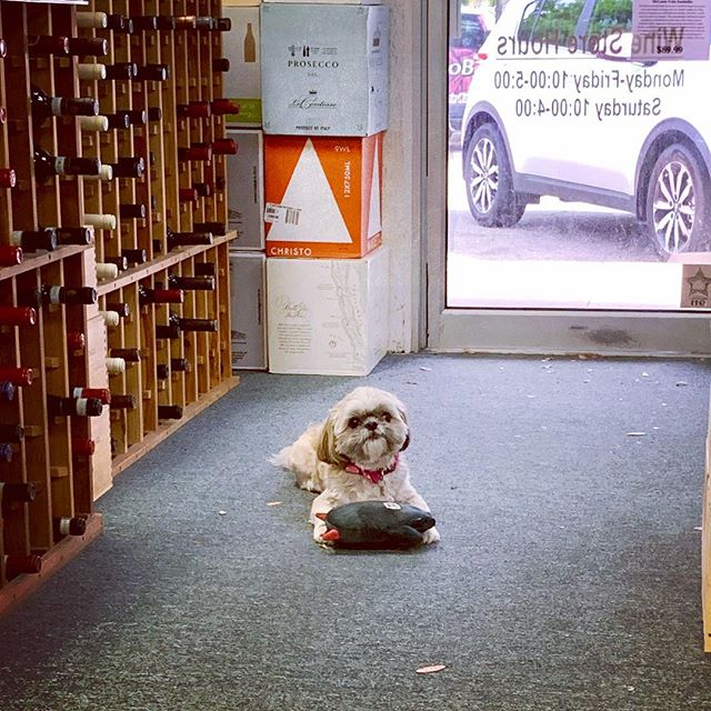 Wine shop pup ❤️🍷