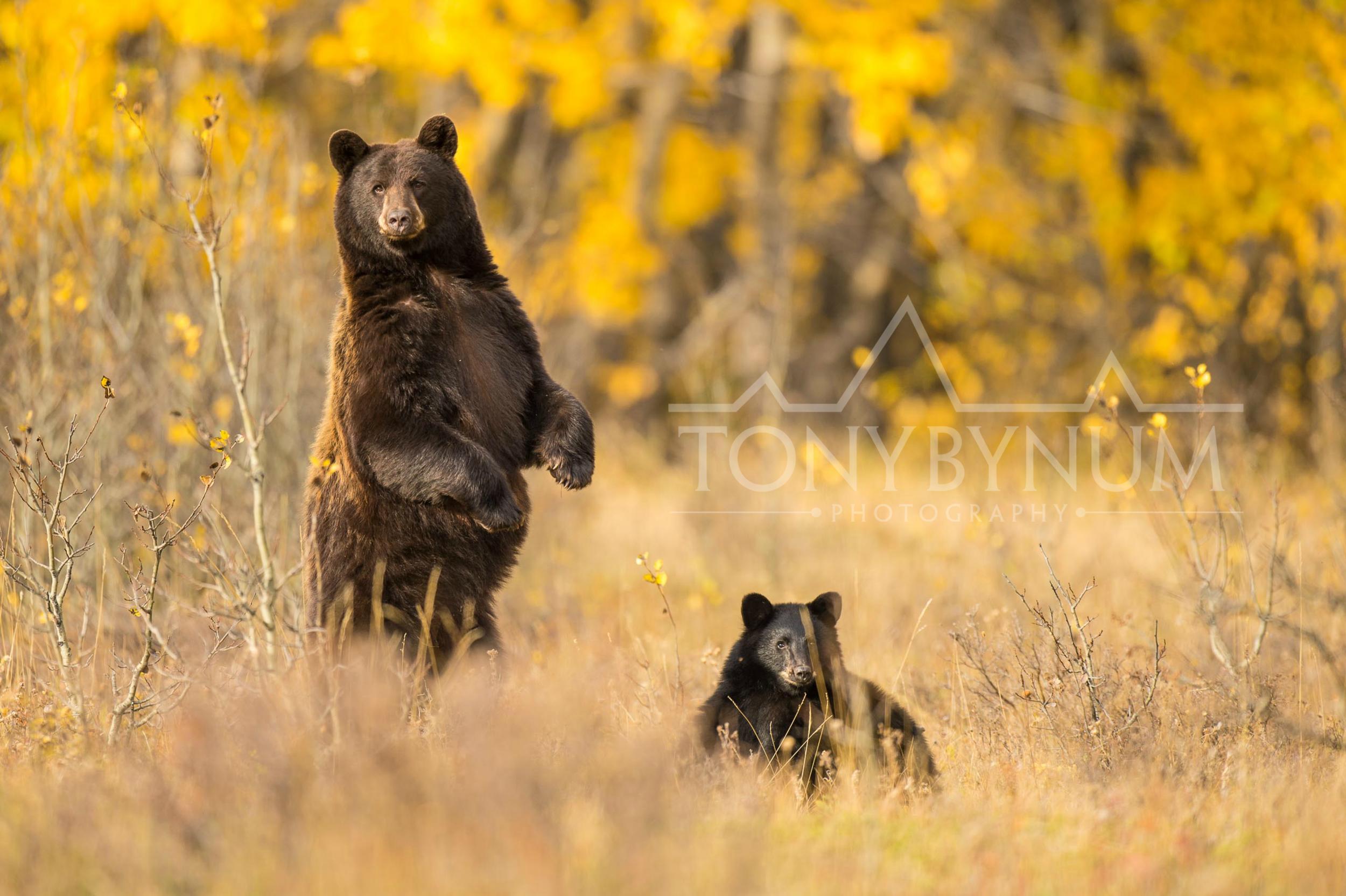 tony-bynum-black-bears