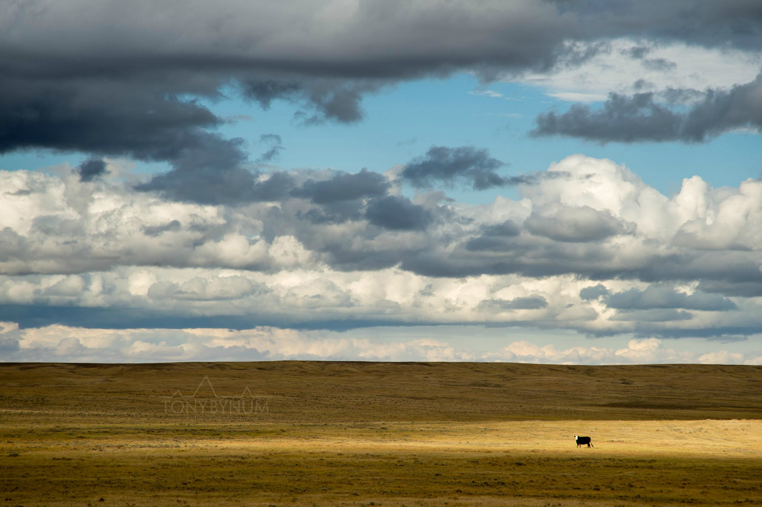 montana-sky-bynum-8249.jpg