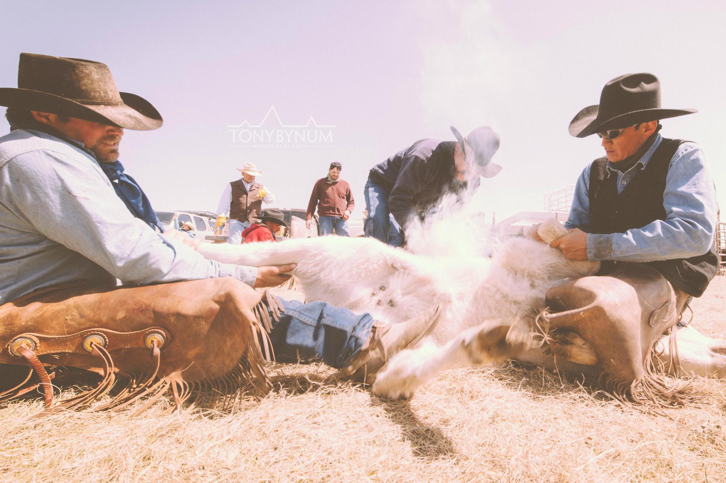 cowboys_bynum-1256.jpg
