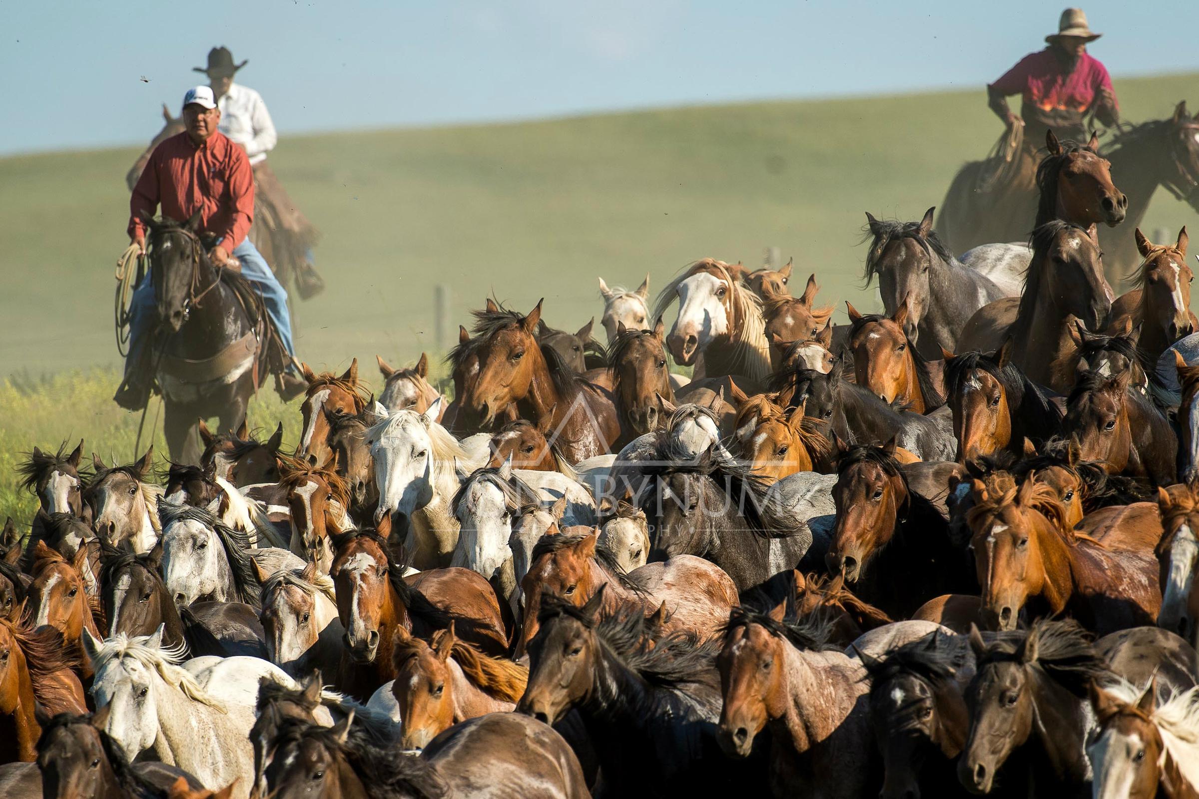 cowboys_bynum-7912.jpg