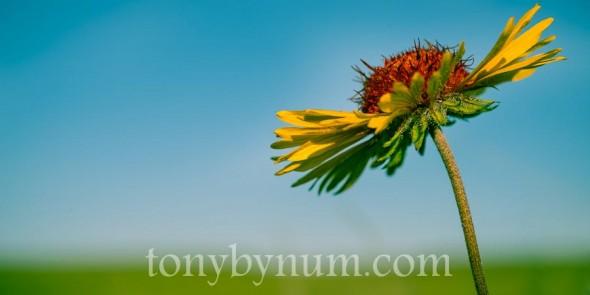 bynum-prairie-June 21- 2012-TAB_1029