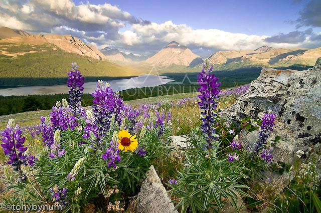 glacier national park tonybynum-14-.jpg