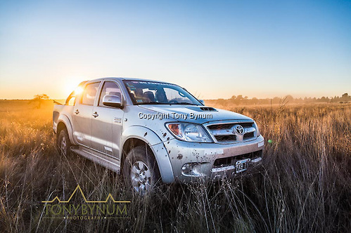 Toyota Hilux pick is the truck of choice for hunting in Argentina. Los Molles Ranch. La Pampa, Argentina ©tonybynum.com