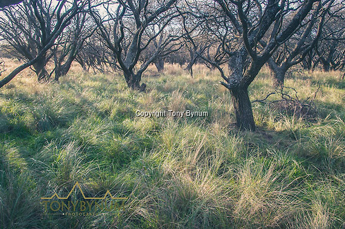 Tall grass under a thick canopy of tress is the typical cover. La Pampa, Argentina ©tonybynum.com