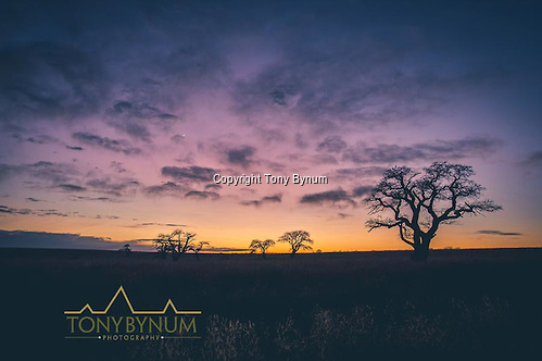 Sunrises like this happen everyday during the winter months of June. La Pampa, Argentina ©tonybynum.com