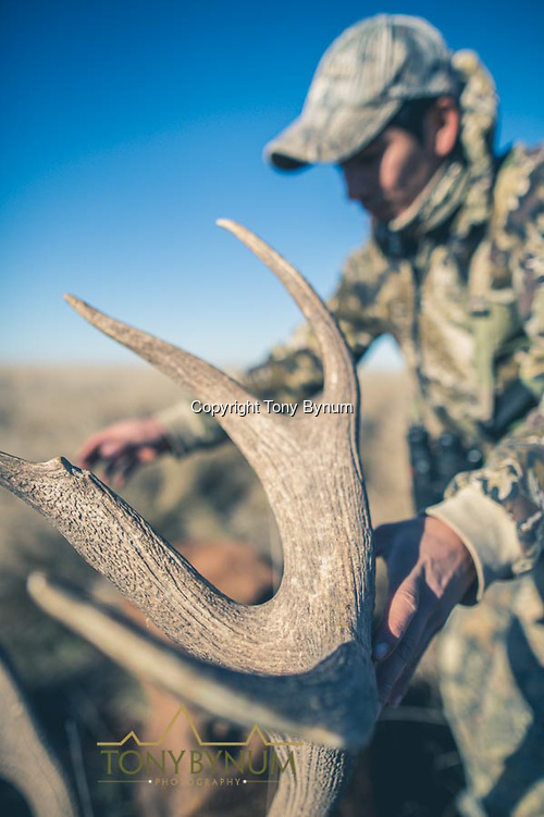 The crown of a mature, free ranging stag. La Pampa, Argentina ©tonybynum.com