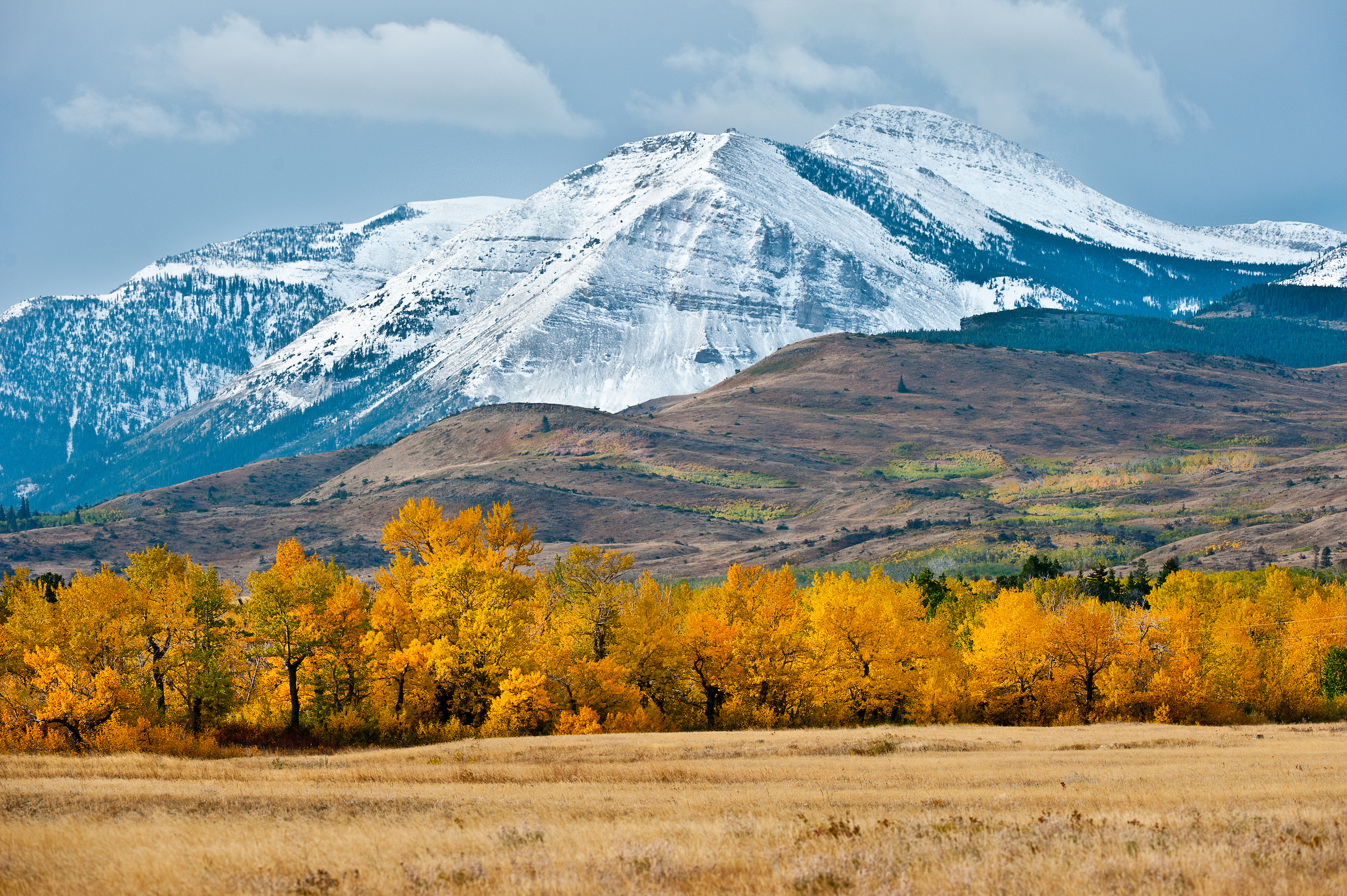 Fall colors in the Badger Two Medicine, Blackfeet Indian Reservation, Montana.