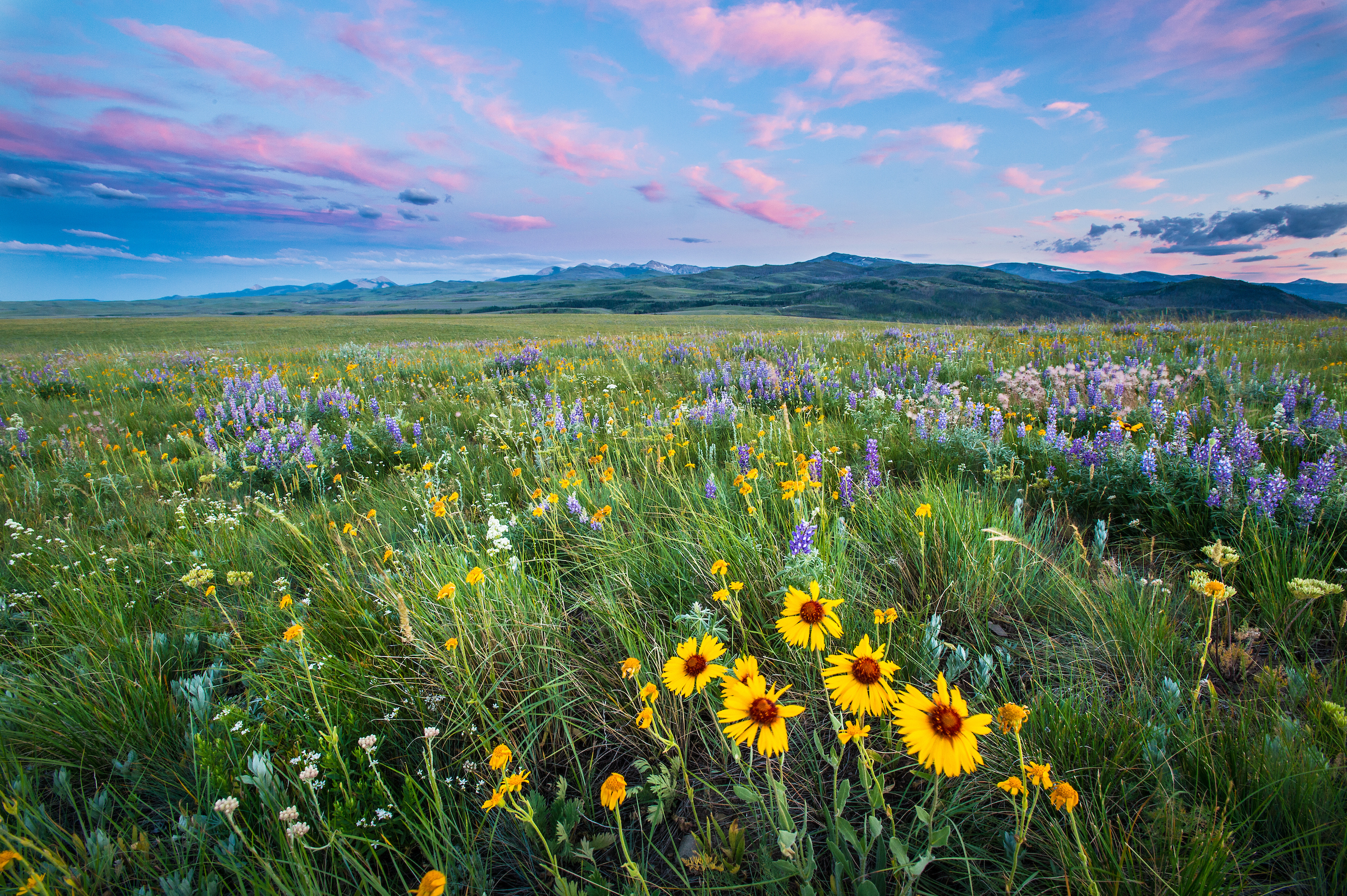 Lush, dense grass and prairie wildflowers spring to life along the Rocky Mountain Front.
