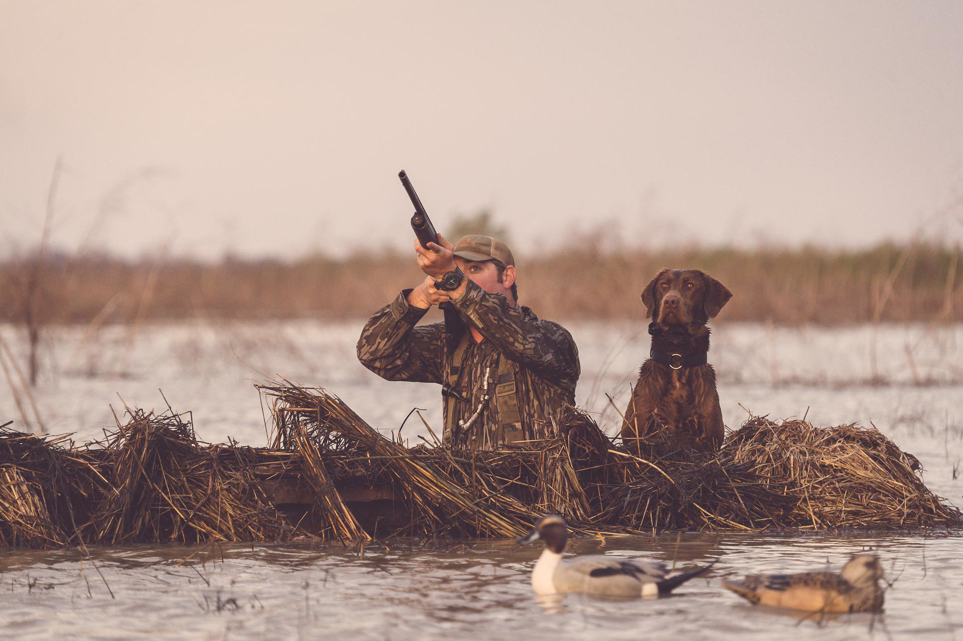 Duck hunter takes aim while in a floating duck blind with chocolate lab. © Tony Bynum