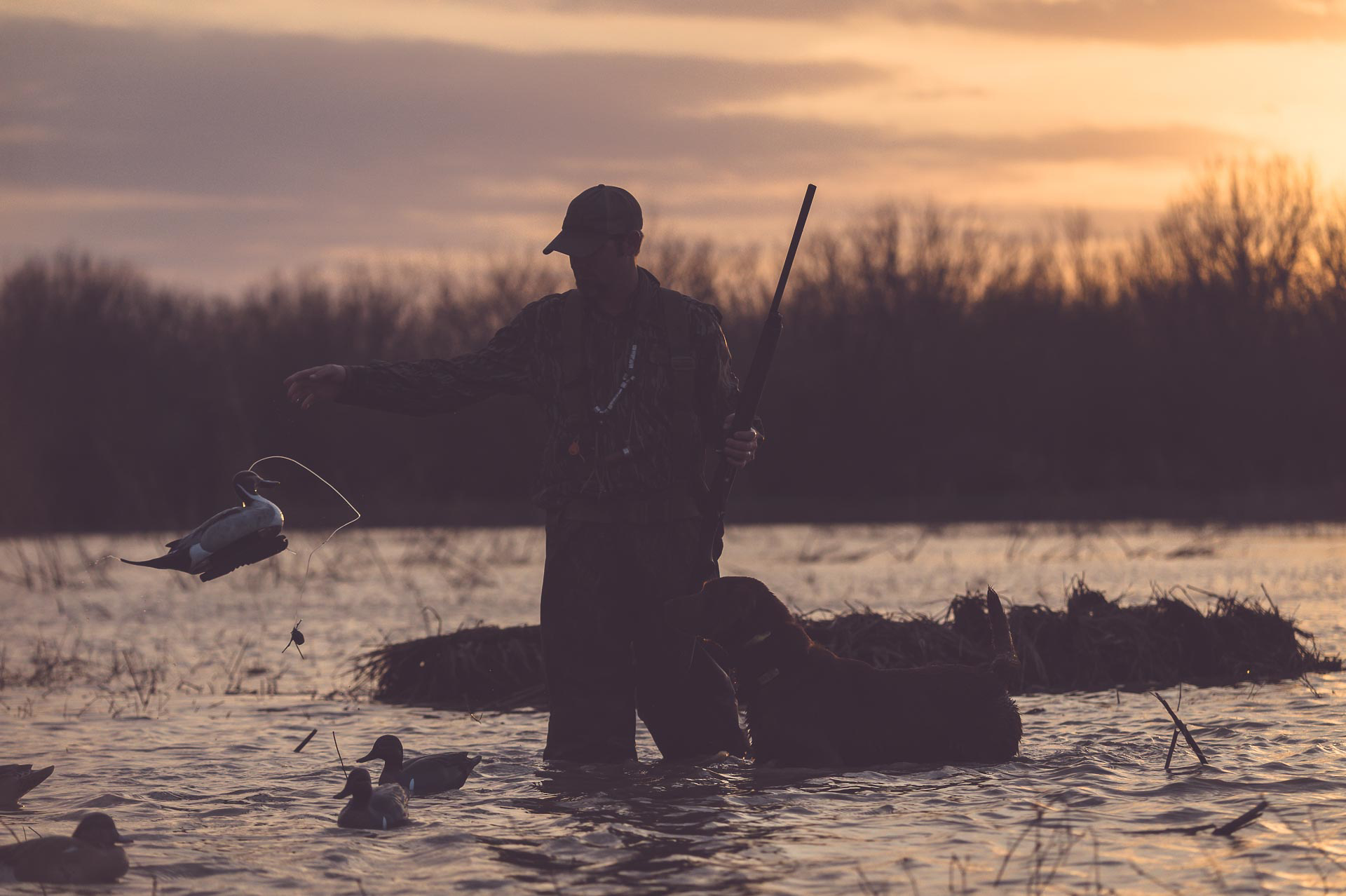 Duck hunting guide Richard spreading duck decoys in the early morning, shotgun in had. © Tony Bynum