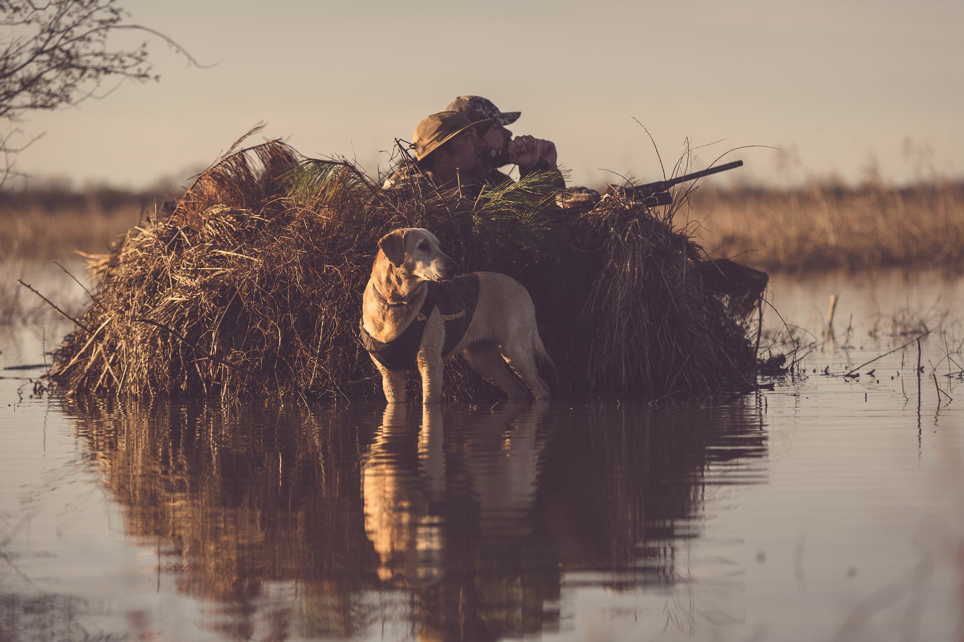 Yellow lab standing in a marsh next to a duck blind with hunters. © Tony Bynum