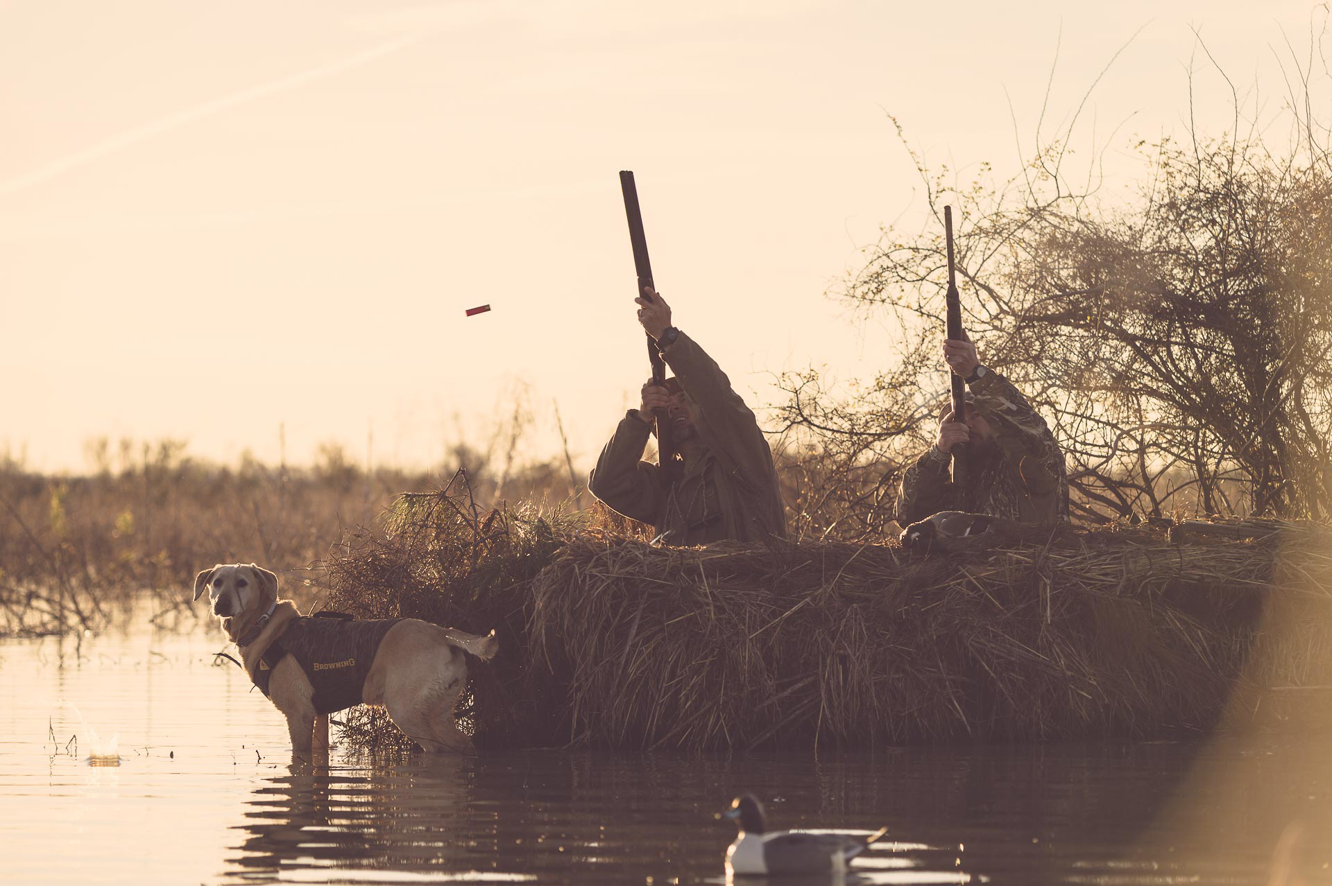 Duck hunters shooting at ducks from a floating blind, with yellow lab watching the sky for a bird to fall. © Tony Bynum