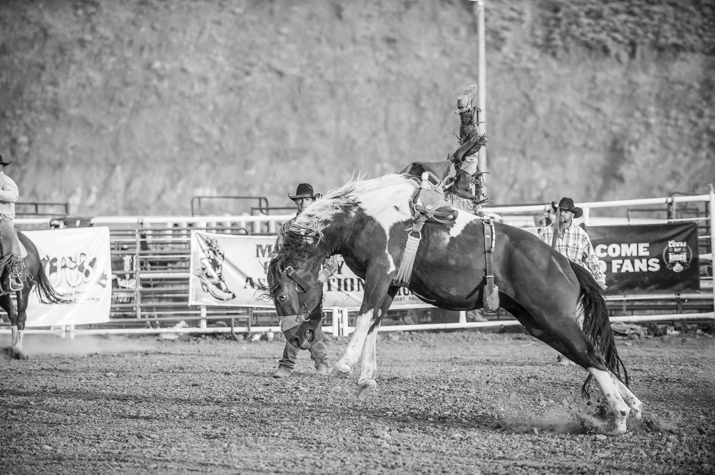 Bareback bucking horse and rider © Tony Bynum
