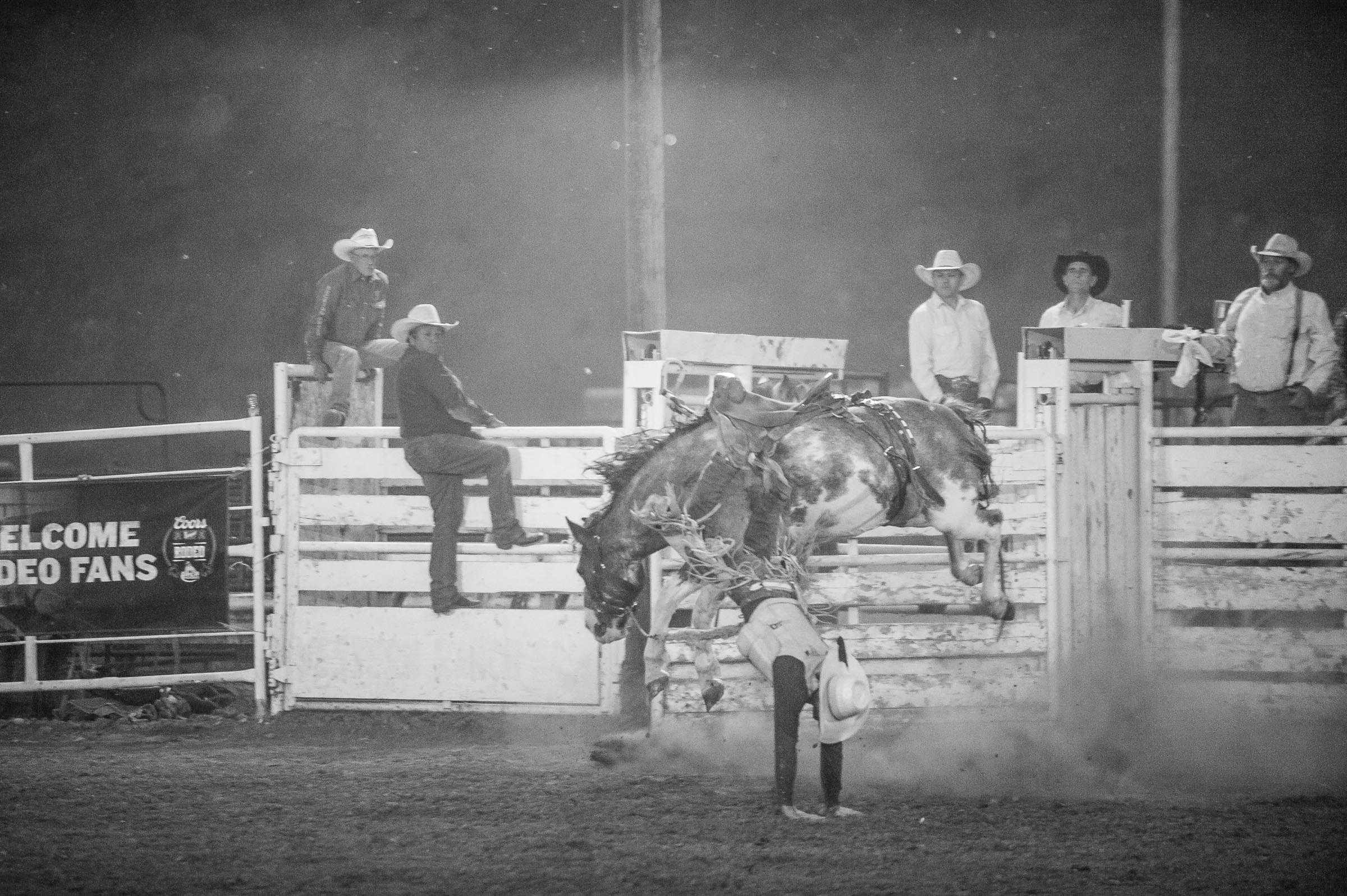 Saddle bronc rider landing on his hands after being thrown from horse © Tony Bynum