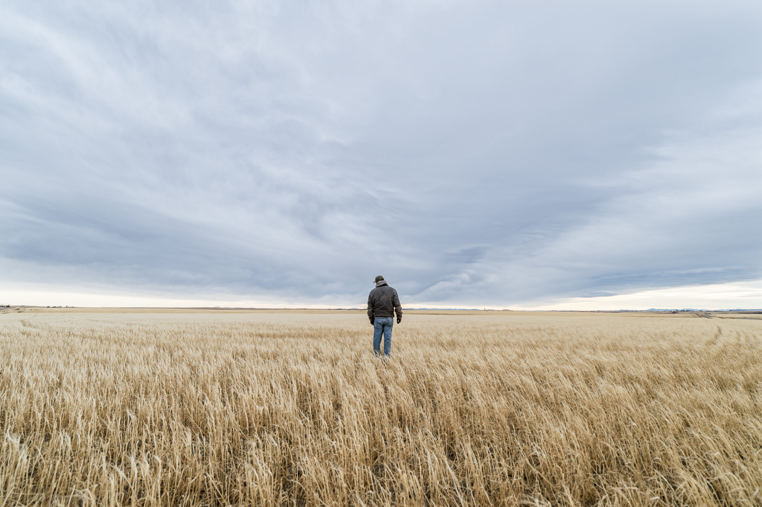 A barley farmer looks over his ravaged crop in Central Montana. ©Tony Bynum