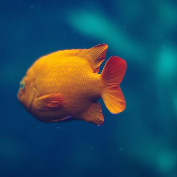 GetAGoldfish_MotherhoodIsItForMe