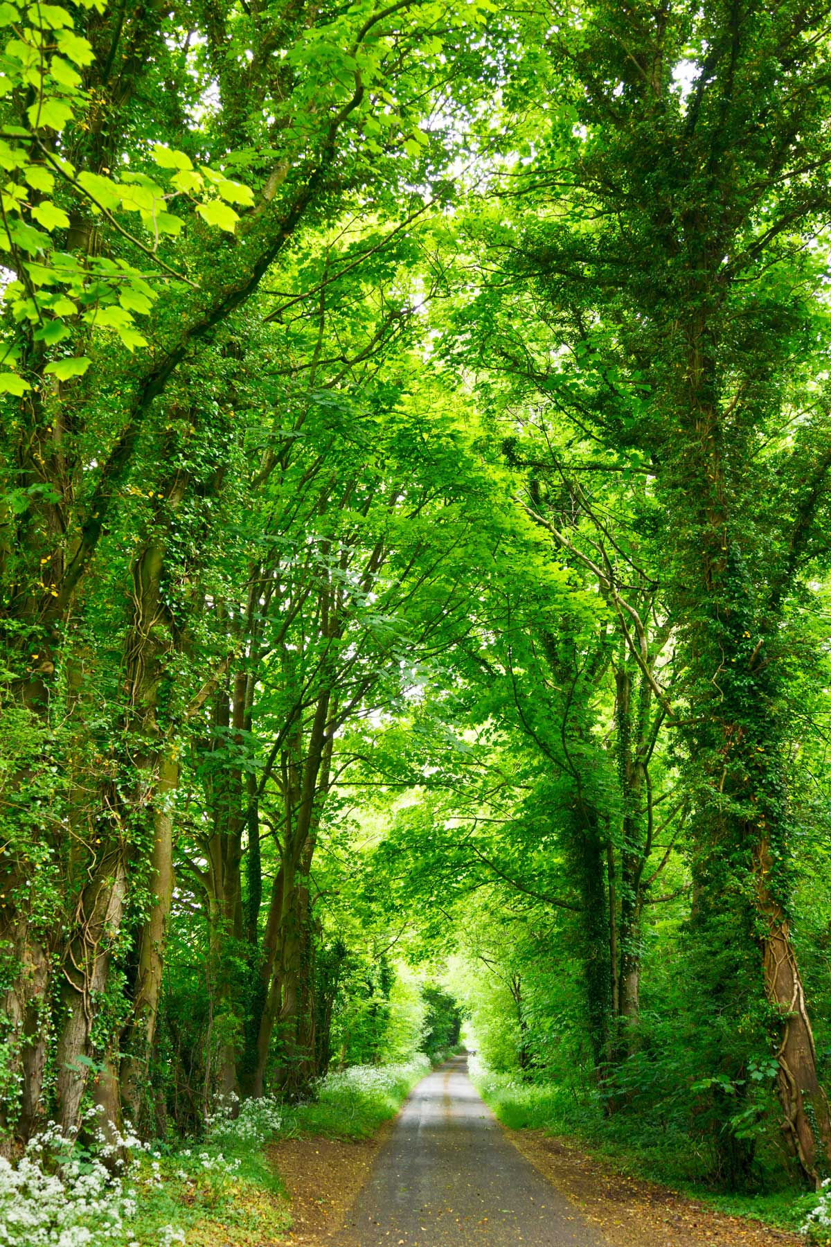 Green-Pathway.jpg