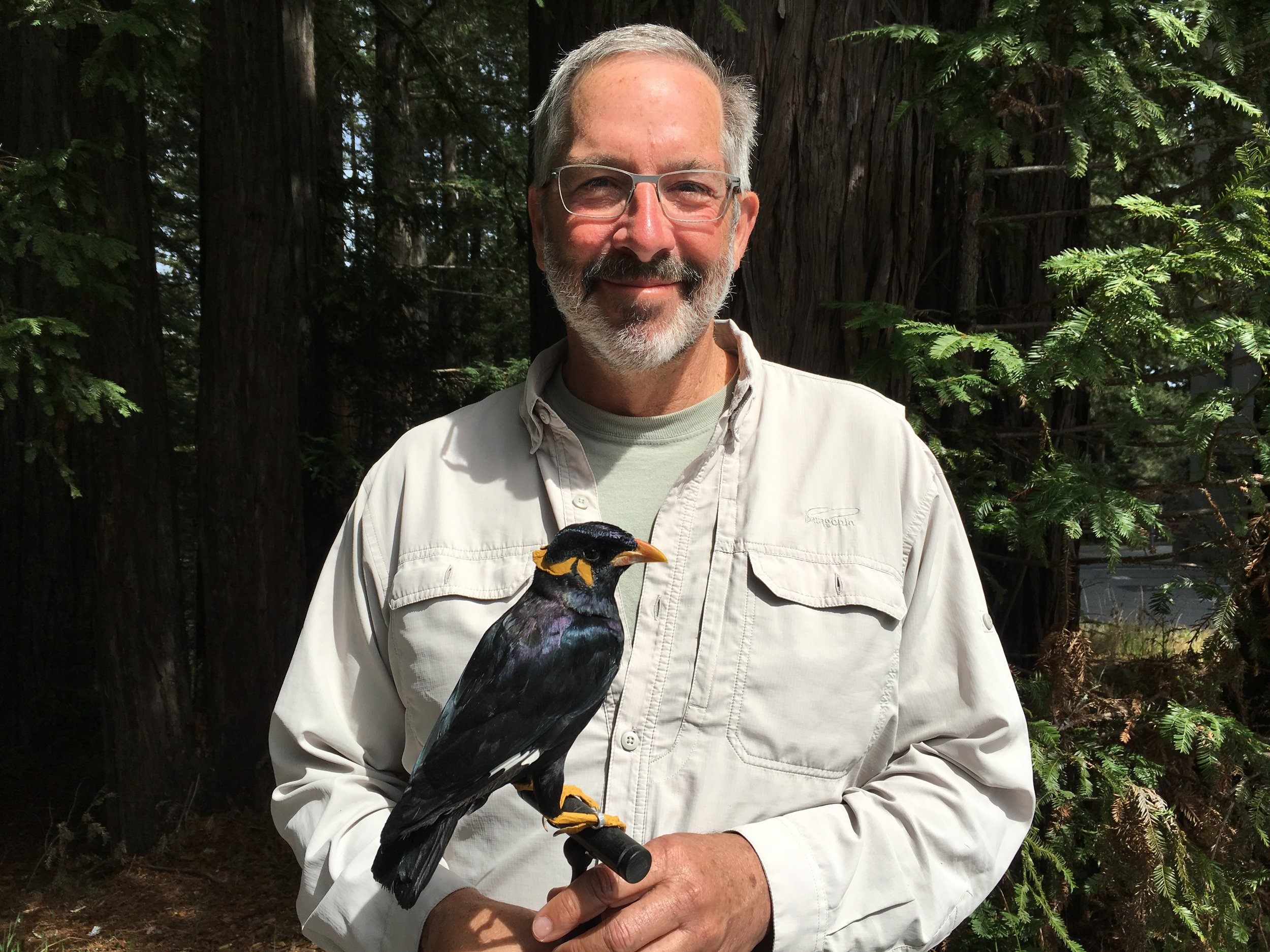 Mike Bolte   Board Member   Mike is a professor of astronomy at UC Santa Cruz as well as the Emeritus Director of UC Observatories. So what's he doing on BSP's Board?  See for yourself!  Mike is a birder and wildlife photographer. Though he has years of experience raising financial support for observatories and telescopes, he also has the lens of a naturalist and educator.