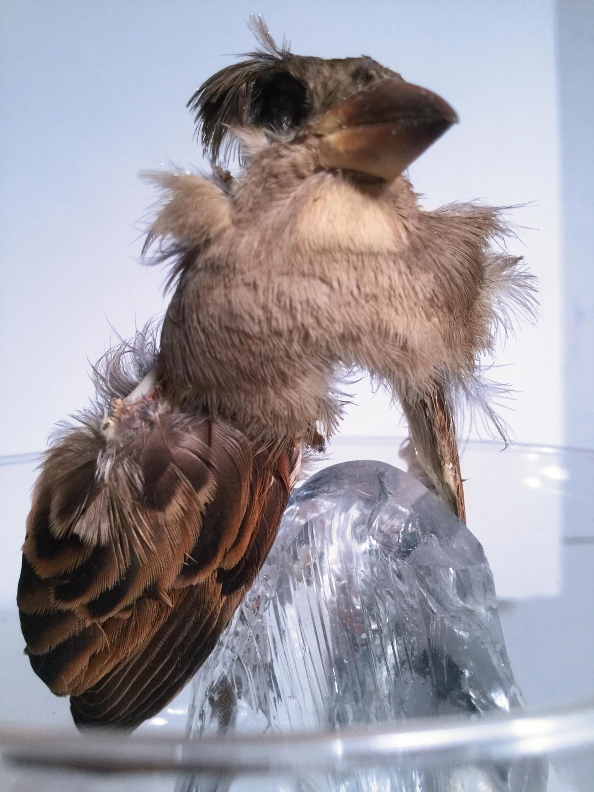 LittleBird2.jpg