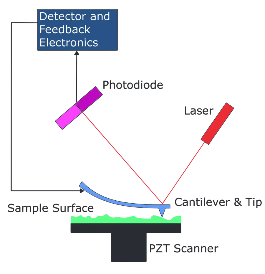 Figure: Diagram of the mechanism in which the AFM images a sample.