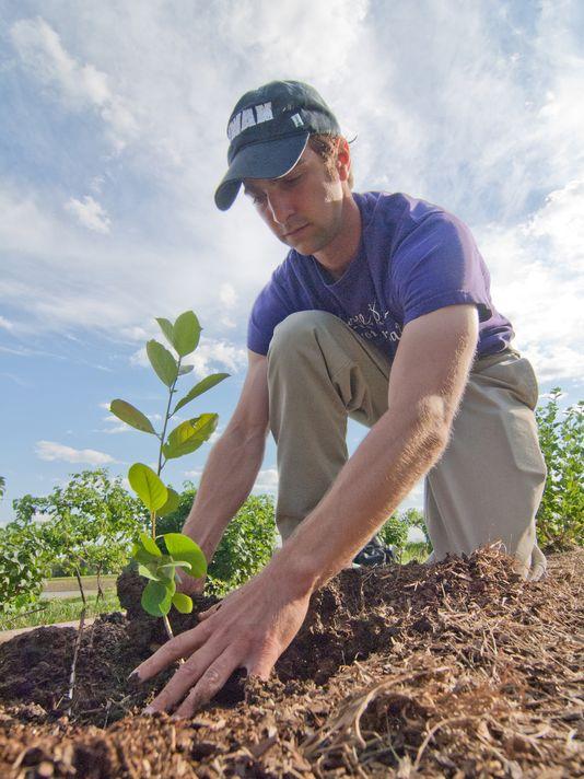 Andrew Pittz plants an aronia berry bush at La Vida Loca Winery in Indianola, IA.(Photo: INDIANOLA RECORD-HERALD PHOTO )