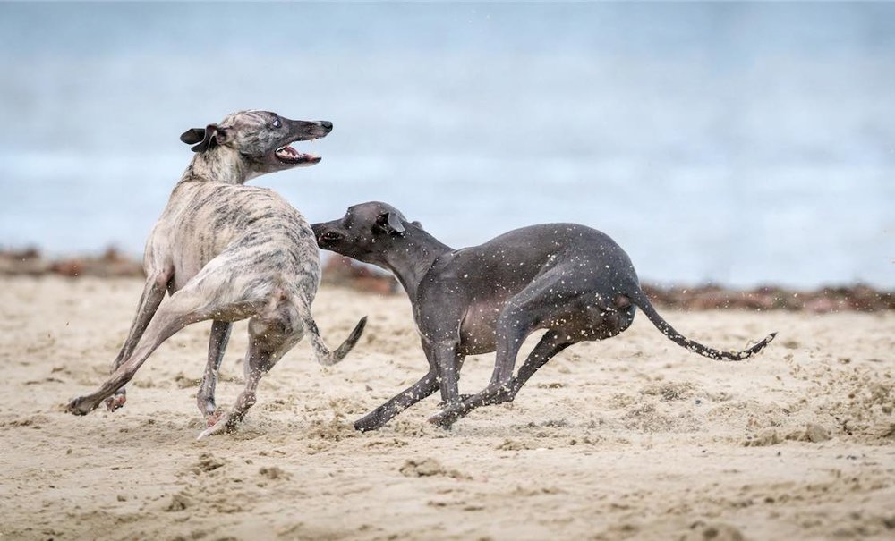 Por Que Los Perros Corren En Circulos Instituto Perro