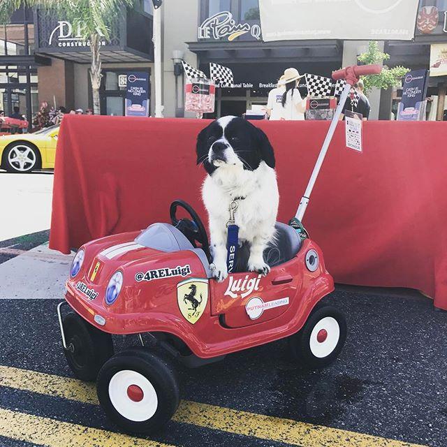 Luigi, el perro que tiene un Ferrari 🚗