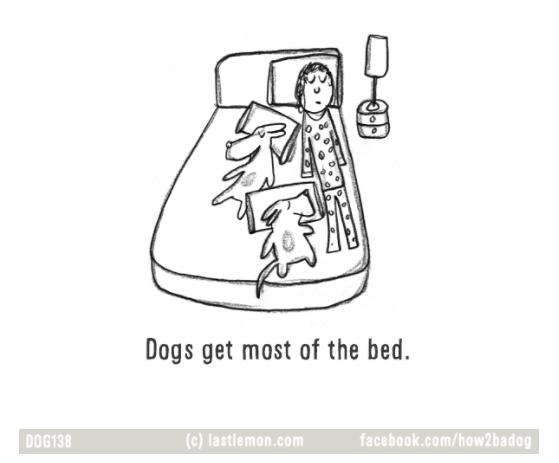 ilustraciones-loco-por-tu-perro-crazy-dog-parent 10.jpg