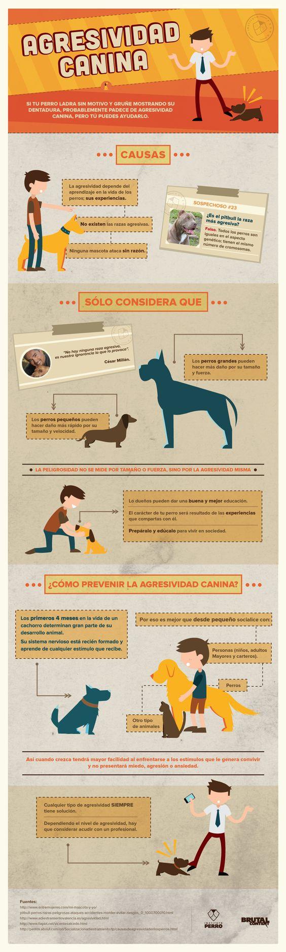 agresividad canina.jpg