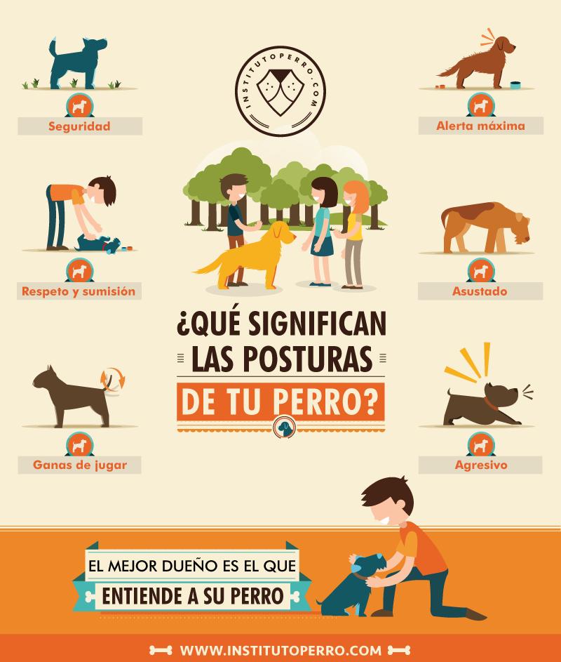 posturas perro.png