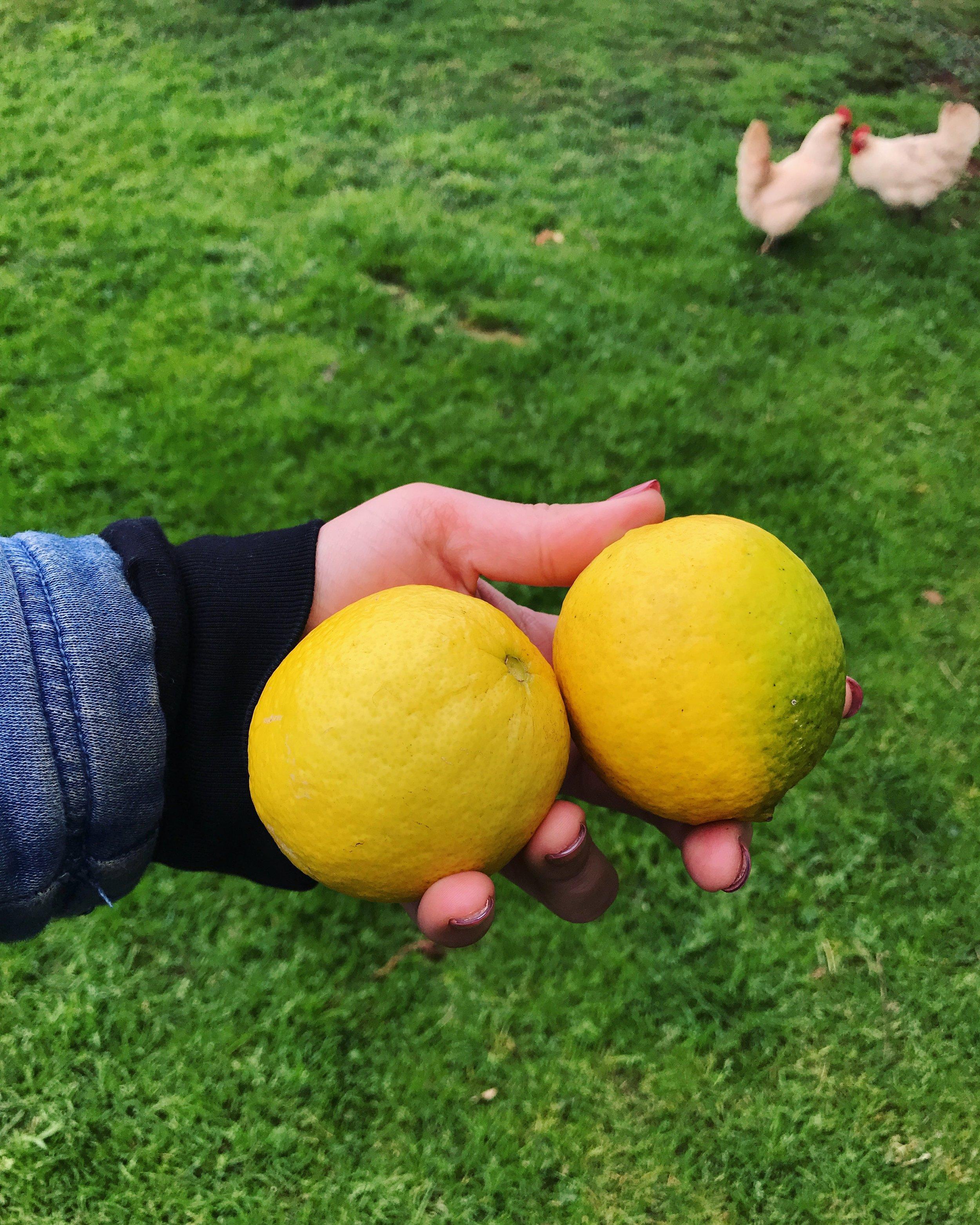 lemon lemonlime.JPG