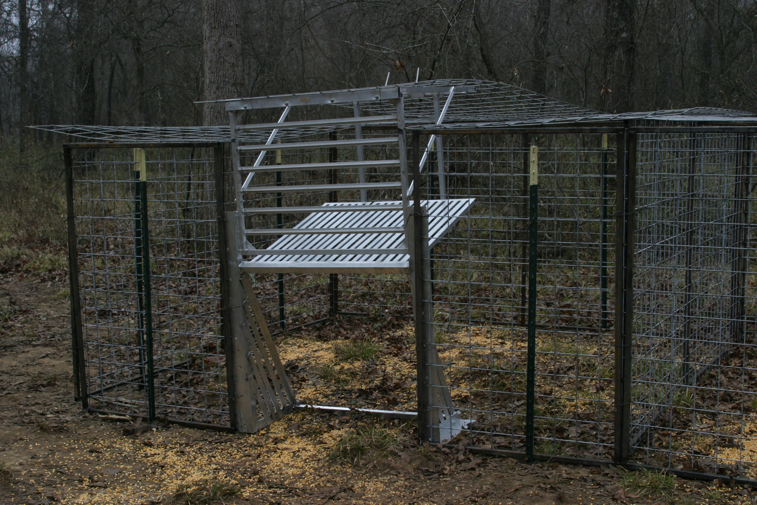 Shown with pen built in a square shape. This works fine, but a circle sometimes works even better. This customer added panels over the top of the pen also. They were trapping larger hogs and did not want to take any chances of them getting out.