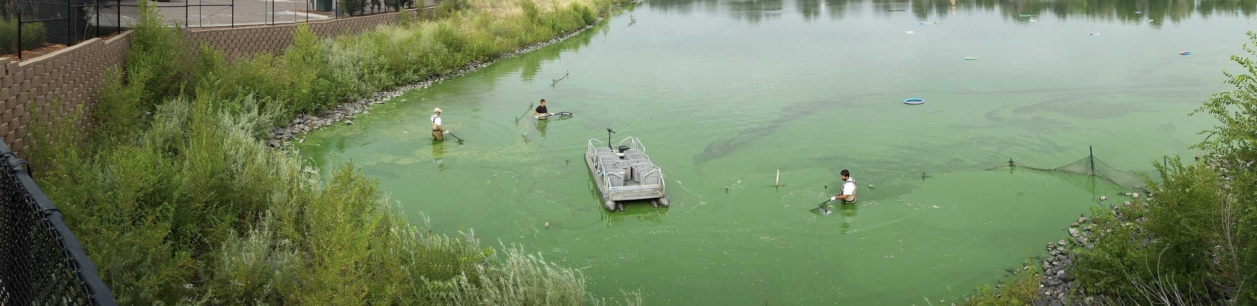 As you see in this photo our compact pontoon boats get used for so much more than just entertainment. In this photo the Colorado company Aqua Golf, uses this Fish N Sport to collect golf balls out of one of the lakes at a course they service.