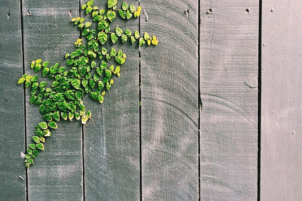 vines-820146_960_720.jpg