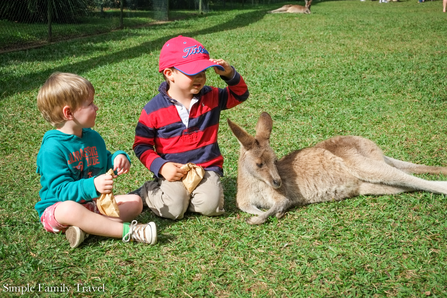 Throw back to the Boy and his friend were much tinier hanging with the Kangaroos at Australia Zoo.