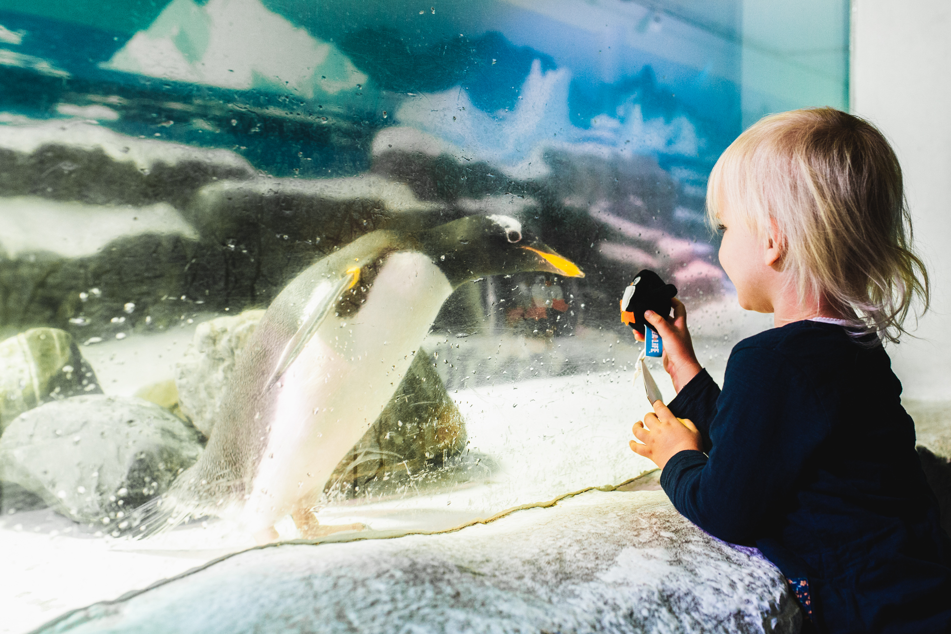 Collaboration with Sea Life, Germany -