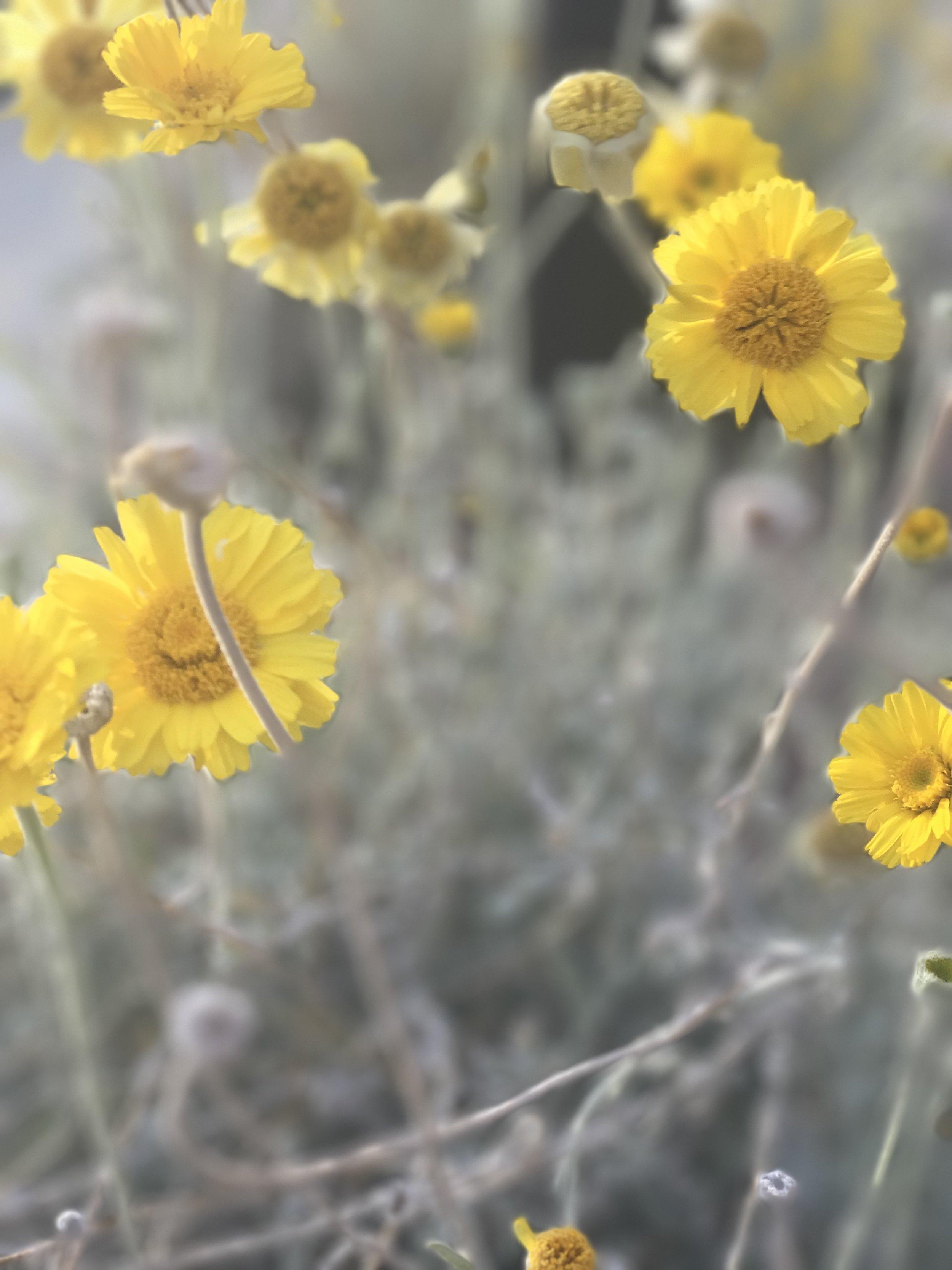 Flowers in Palm Springs California