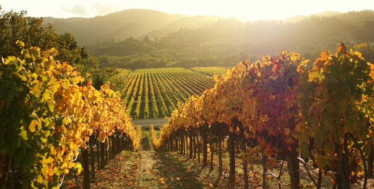 Best-of-Northern-California-Wine-Country-1-athometn.com_12.jpg