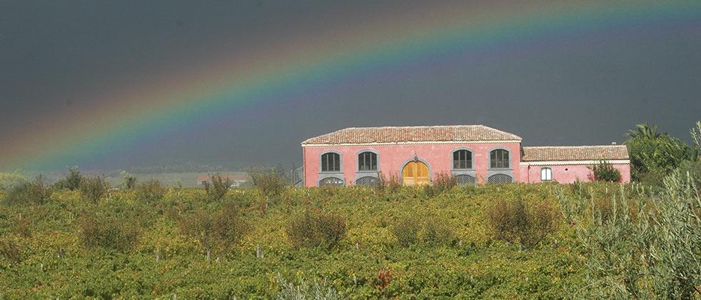 vini-wine-etna-calderara-sottana-08.jpg