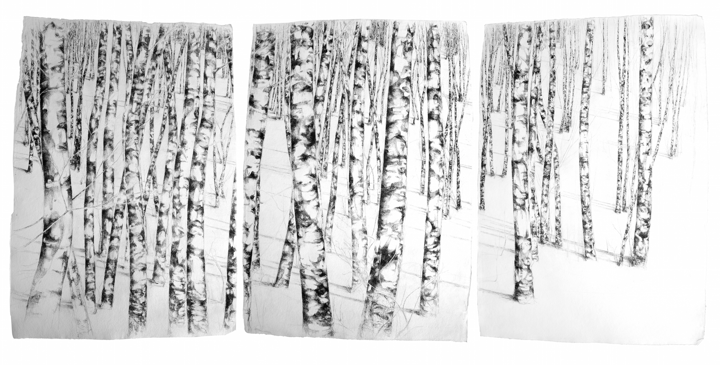 Title: Lloyd Wright triptych Size: 135 x 300 cm overall Medium: pencil and ink on handmade paper