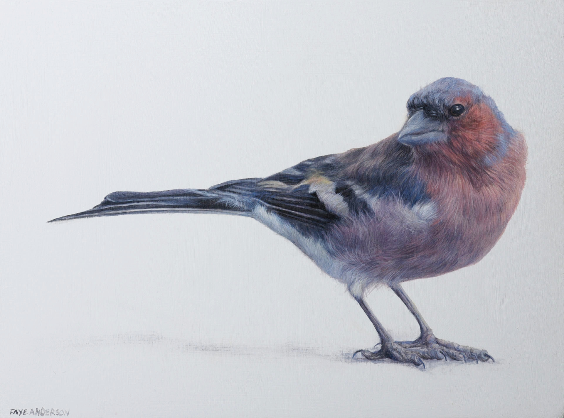 Artist: Faye Anderson  Title: Little Chaffinch  Size: 20 x 15 cm  Medium: Egg Tempera   SOLD